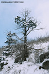 Winterlandschaft_1_small