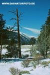Winterlandschaft_2_small
